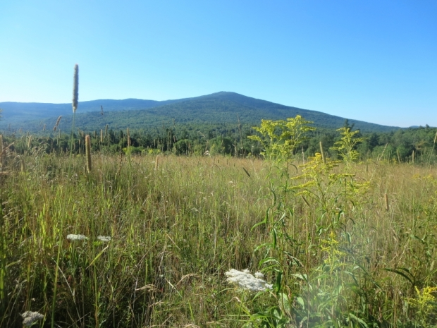 view of monadnock from birch meadow